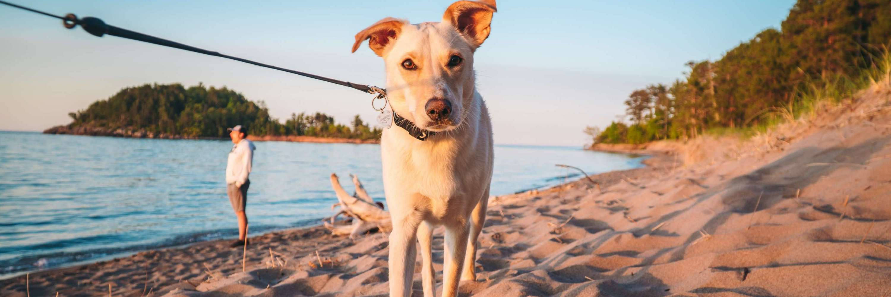 A dog on the beach at Little Presque Isle