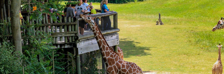 Family hand-feeding giraffe at the zoo.
