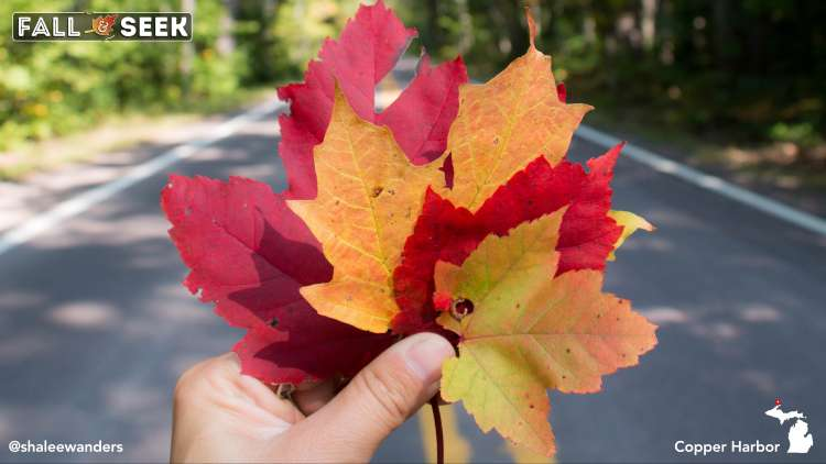 Fall color leaves at Copper Harbor, Michigan. Photo by Shalee Blackmer