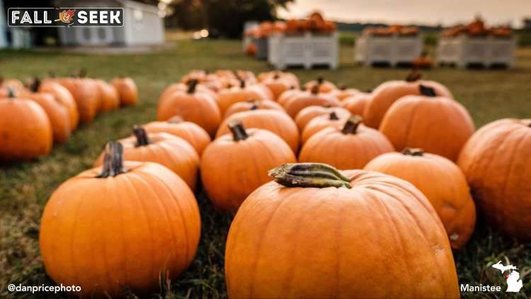 Pumpkins at Manistee Fruit Stand, Photo by Dan Price.