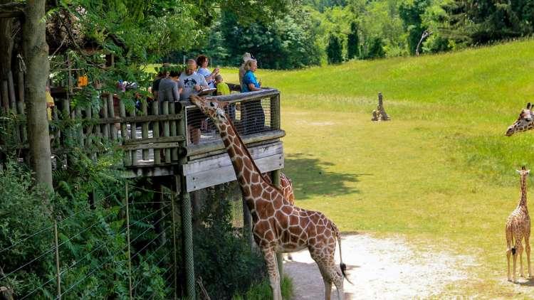 Children feeding Giraffes at Binder Park Zoo