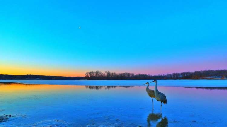 cranes sanding on the shore sky is blue, pink and orange