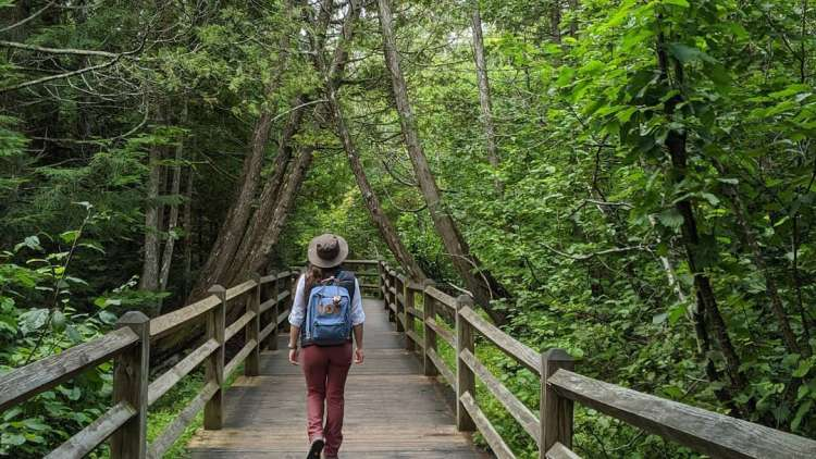 hiker on a bridge in a park with trees all around