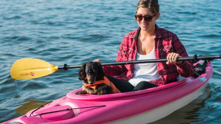 A dog in a kayak with its owner