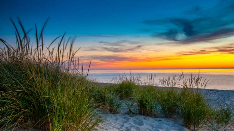 white sand and green grassweed on the beach at sunset