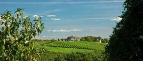 Fields of a vineyard