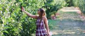 Girl picking apple on sunny day.