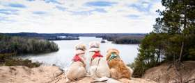 Three Dogs at Lumberman's Monument