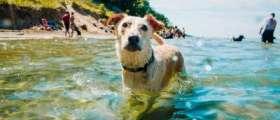 A dog swimming at Kirk Park Beach