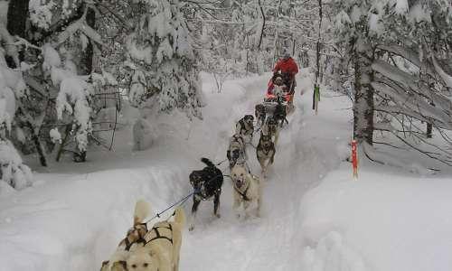 Dog sledding michigan upper peninsula publicscrutiny Choice Image