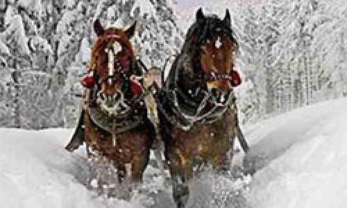 Ring in the Holidays With a Horse-Drawn Sleigh Ride