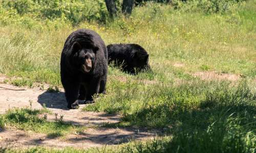 8 Michigan Destinations Perfect for Watching Wildlife