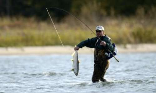 How to Reel in a Salmon or Steelhead in Pure Michigan This Fall