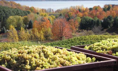 4 Ways to Celebrate a Bountiful Harvest at Michigan Wineries