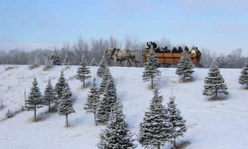 Start a Tradtion at These Michigan Christmas Tree Farms