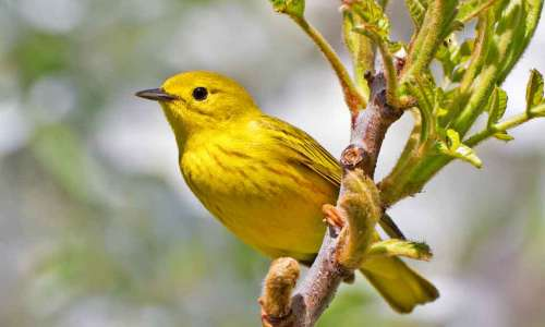 Trails and Sanctuaries Perfect for Bird Watching in Michigan