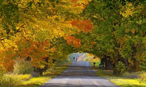 Beautiful fall foliage in Michigan