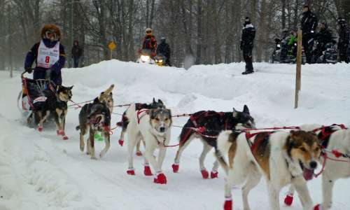 What to Expect at The UP 200 Sled Dog Race in Marquette