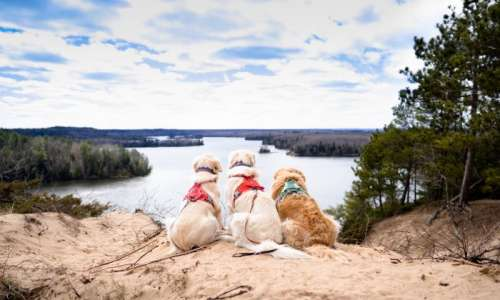 Three dogs at Lumberman's Monument in Oscoda, overlooking the water