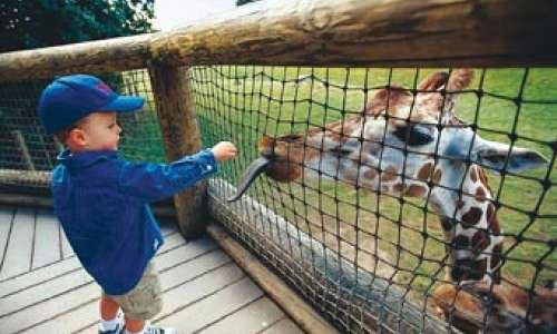 8 Great Places for Animal Encounters