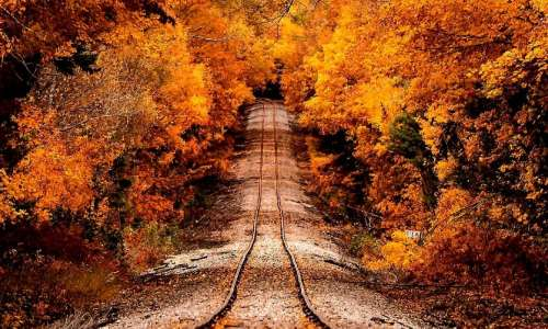 Train tracks under fall trees in Michigan