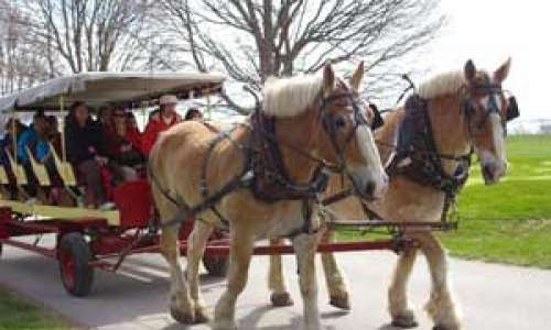 Mackinac Island Carriage Tour