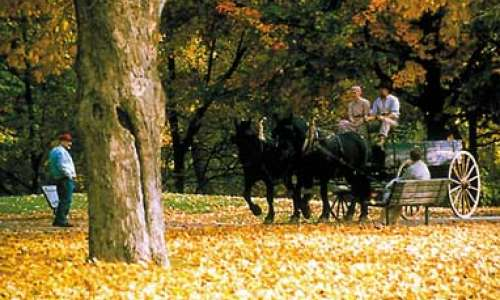 "Mid-Michigan County Road Agencies Release ""Don't Miss""  List of Local Roads for Fall Colors"