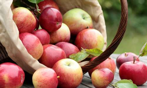 5 Spots to Sip Cider, Pick Pumpkins and Soak Up Fall Around Kalamazoo