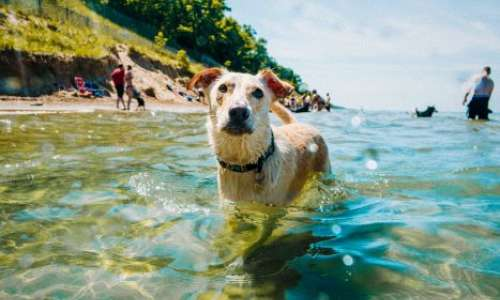 A dog swimming a Kirk Park Beach