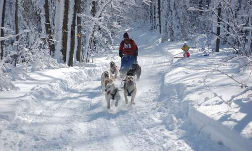 4 Charming Michigan Small Towns to Visit During Winter