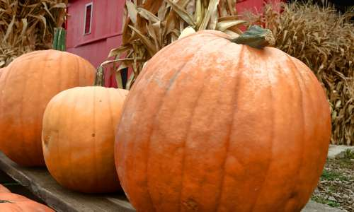 Pumpkin Patches in Michigan Perfect for Fall