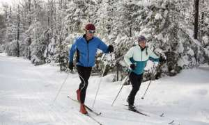 Cross country skiers in forest.