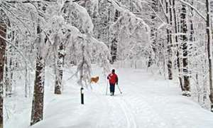 Dog and cross country skier on snowy trail