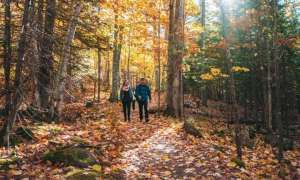 Couple hiking in forest during fall