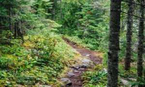 Trail at Isle Royale National Park