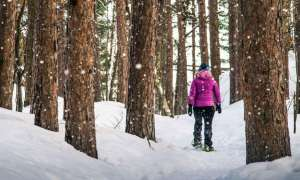 Woman hiking in snowy forest.