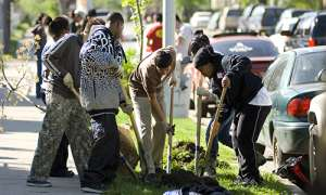 people planting trees in the city