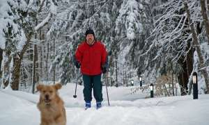 Dog and cross country skier on snowy day