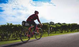 Person riding bike beside vineyard