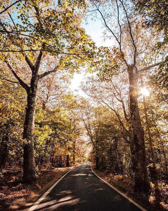 16 stops for a scenic road trip along m 119 and the tunnel of trees