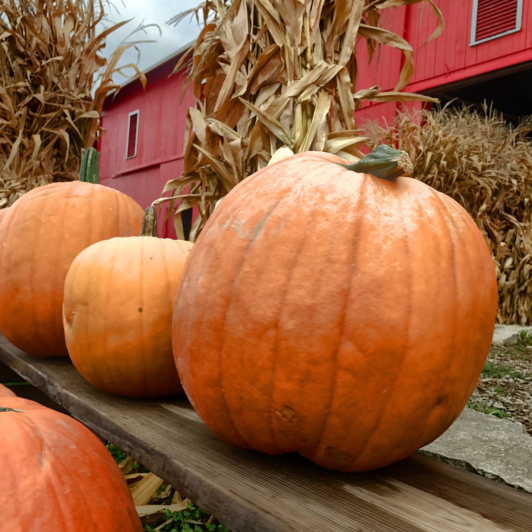 db16bf99168ee9 Pumpkin Patches in Michigan Perfect for Fall