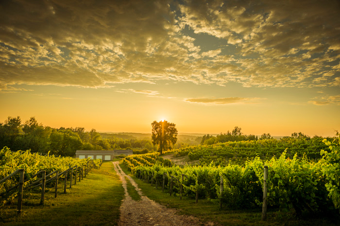 11 Unique Wine Experiences You Can Find At Michigan Wineries Michigan