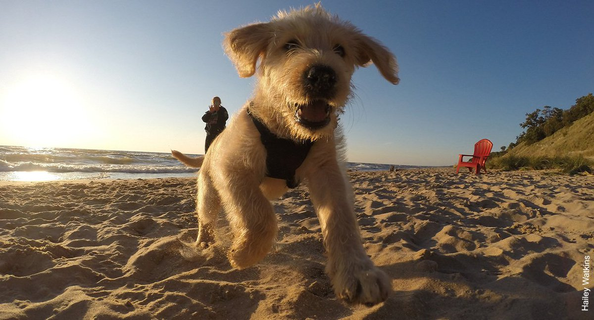 Dog Friendly Places Northern Beaches