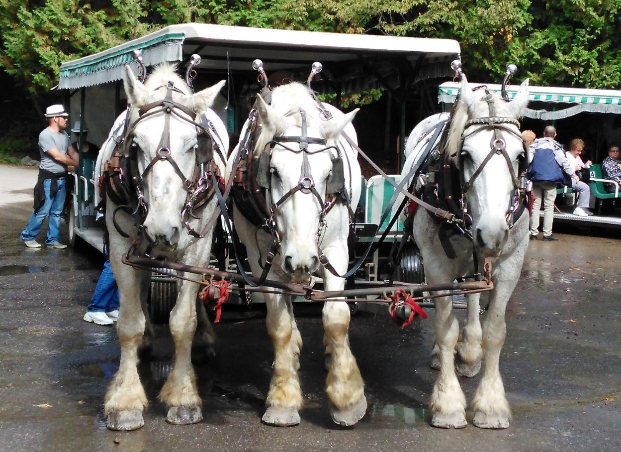 Mackinac-Island-Carriage-Tour_0.jpg