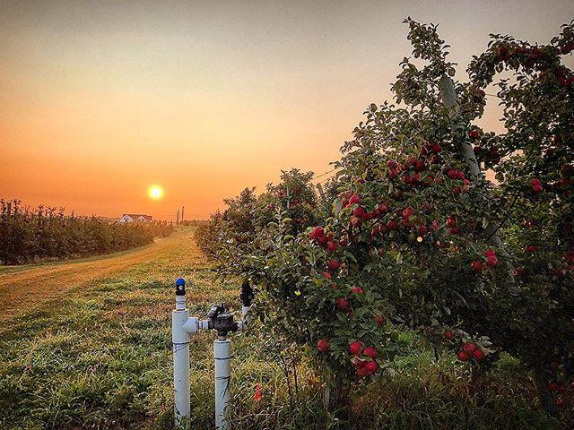 Michigan apples in fall.jpg