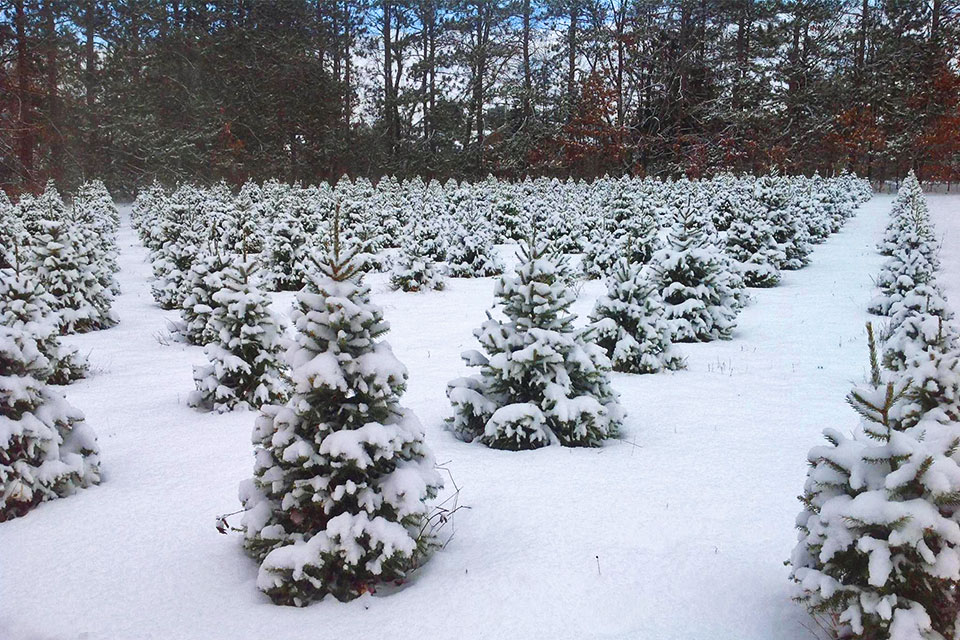 Christmas Tree Farm In Michigan