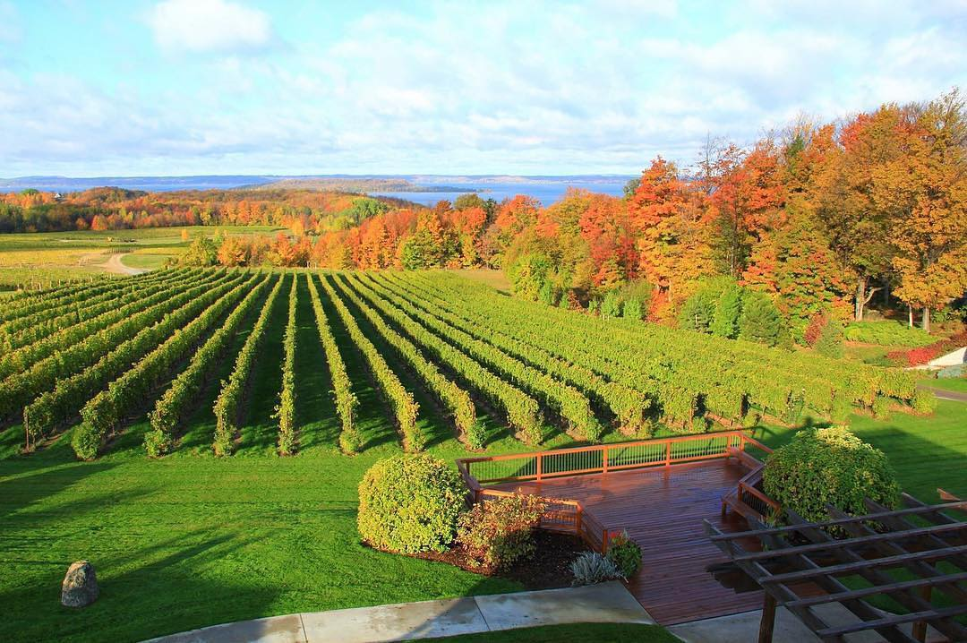 Vineyard in Traverse City