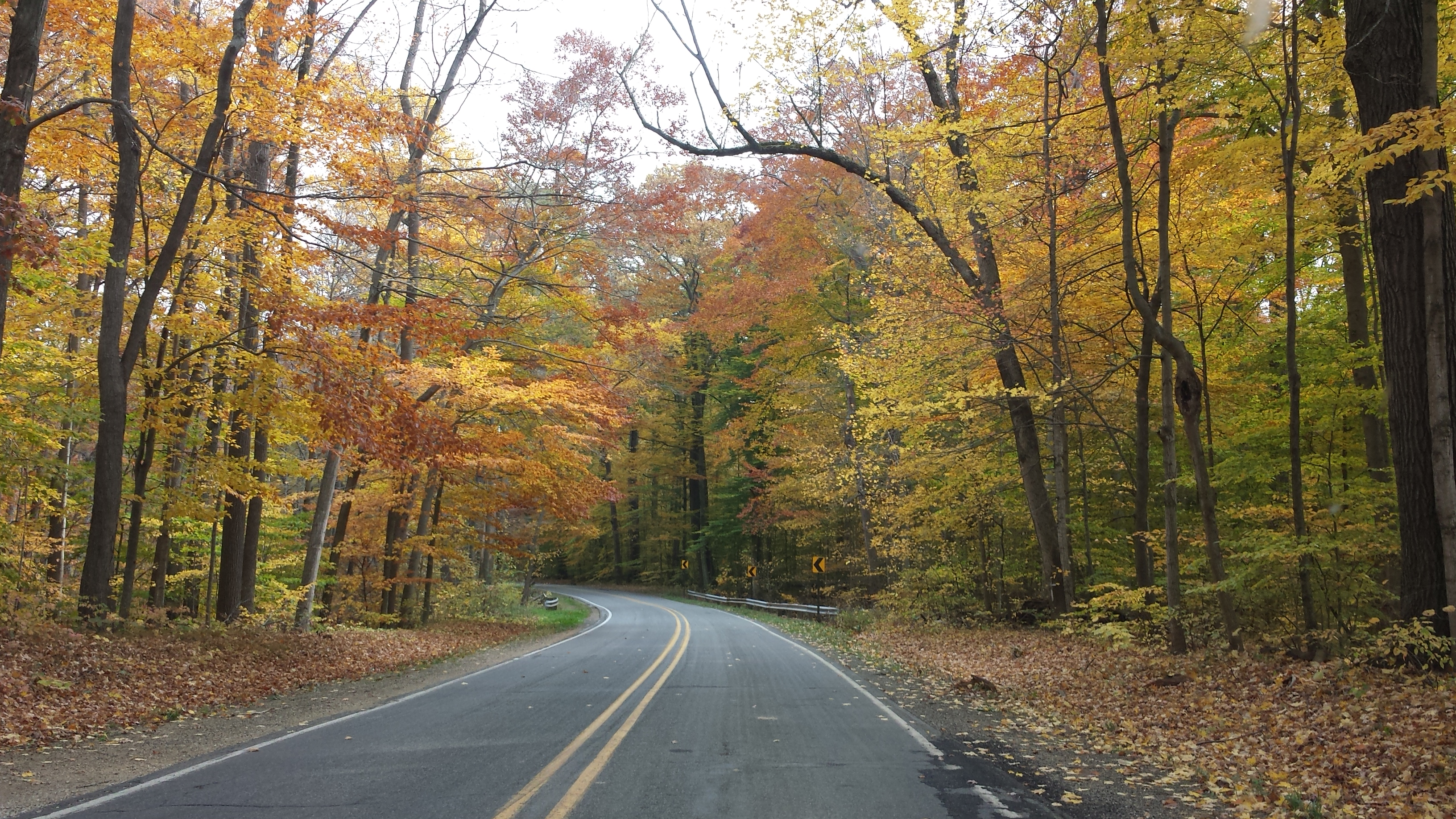 Warren Woods Road Fall Curve.jpg