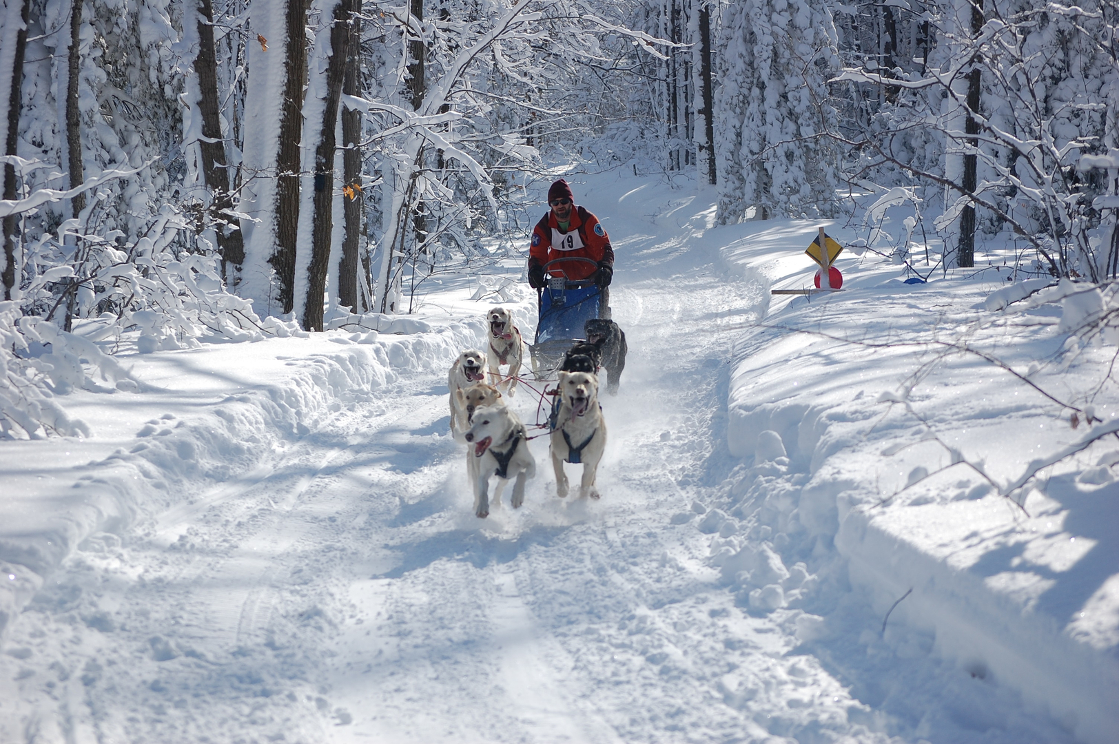 Dog sledding michigan sprint sled dog racing publicscrutiny Choice Image