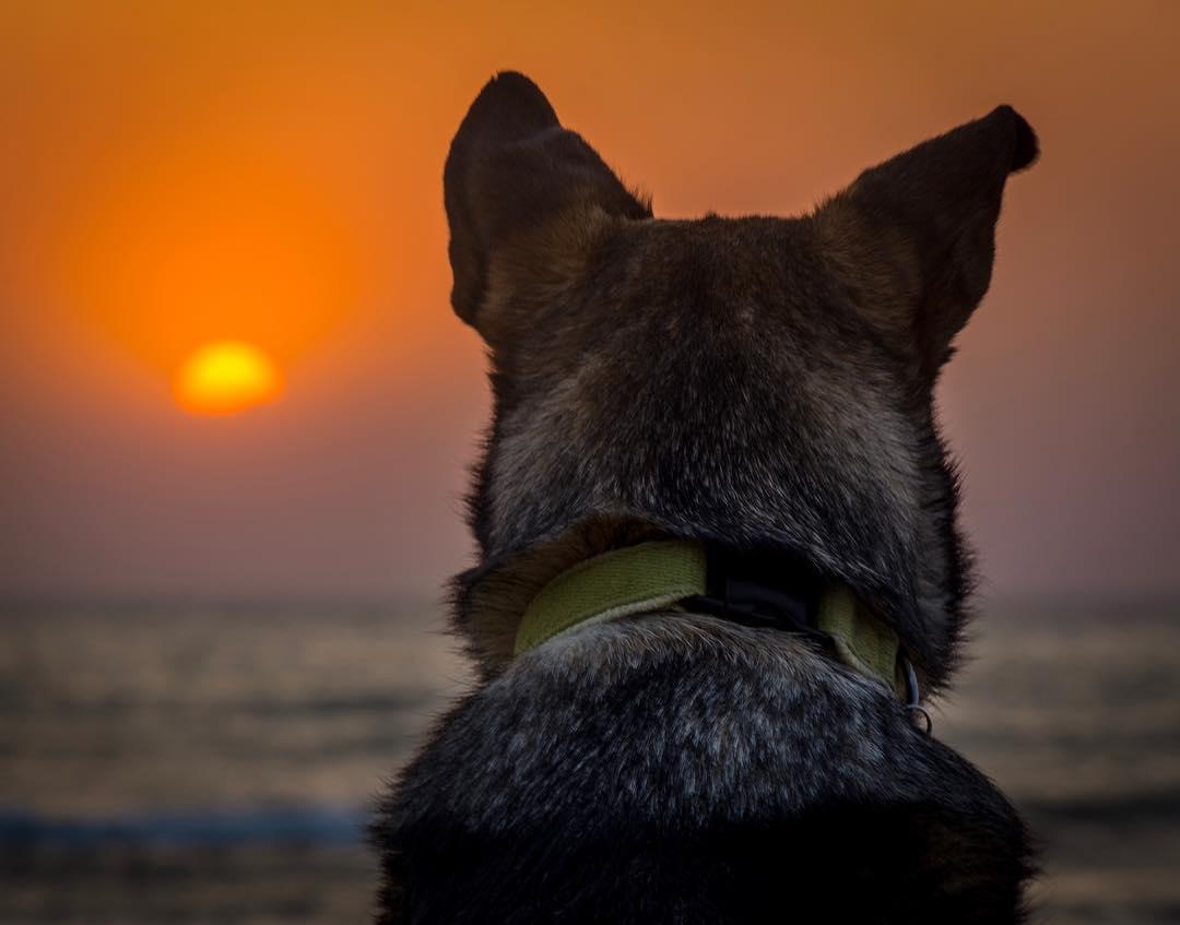 Warren Dunes State Park Dog Beach